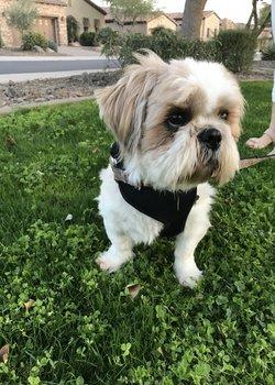 Winston at park